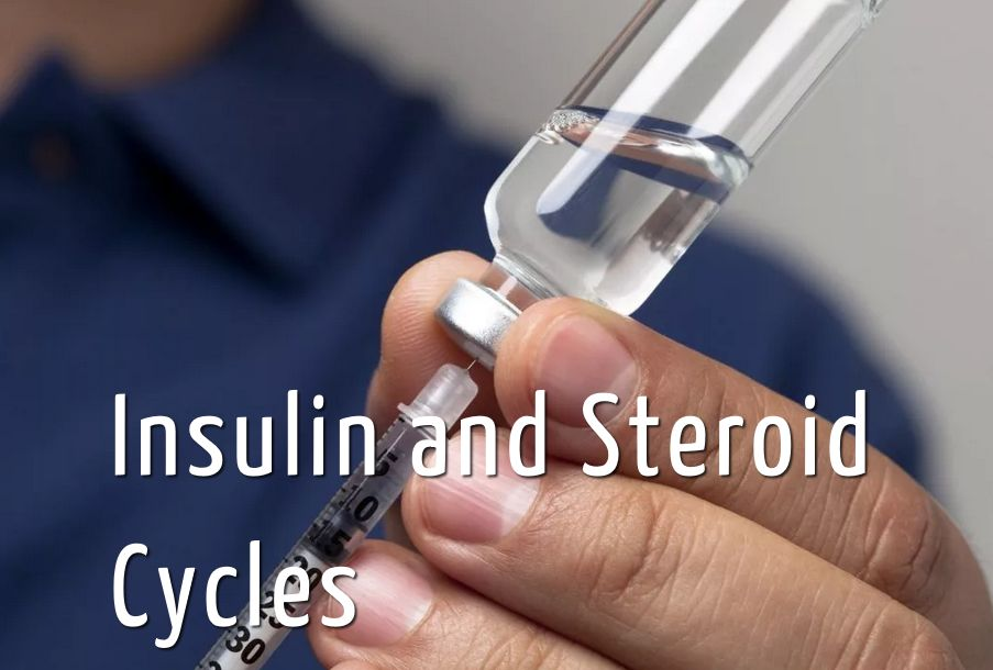 Insulin and Steroid Cycles